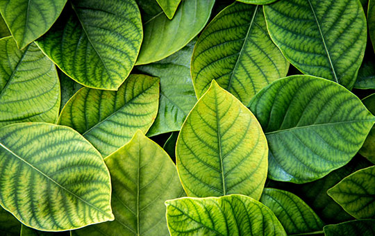 Grandview Cabinetry ESP Certification Responsible Environmental Practices